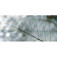 Magia декор серый / 23x50 см